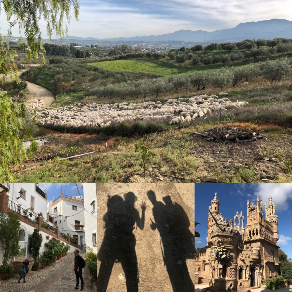Spanje met schapen